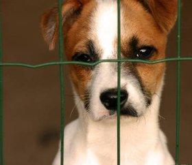 Maltrattamenti cani: multe salate in arrivo
