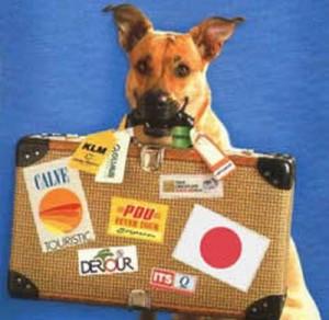 Portare il cane in vacanza: L'unione europea