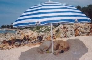 Vacanze 2011: i gestori dei lidi non vogliono i cani
