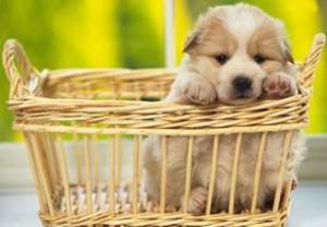 Cuccioli e bisogni: come gestire la vita?