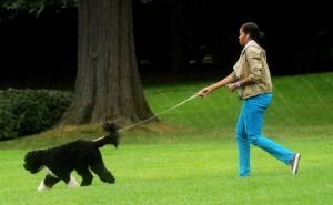 Cani senza guinzaglio? Attenzione alle multe